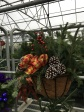 Holiday Hanging Baskets
